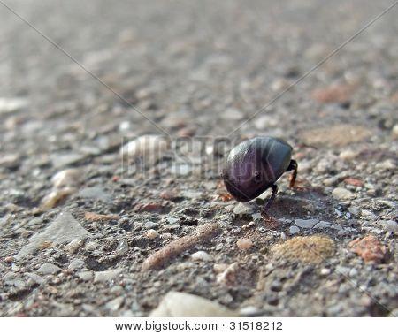 Bug Backside While Walking On Pavement