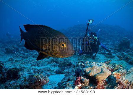 Midnight Snapper& Underwater Photographer, Maldives