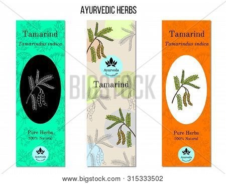 Ayurvedic Herbs Banners. Tamarind Tamarindus Indica . Hand Drawn Botanical Vector Illustration