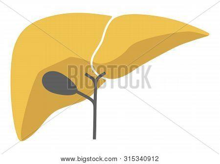 Human Internal Organs: Liver And Gall Bladder. Vector Image. Flat Design
