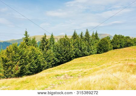 Mixed Forest On A Grassy Hill. Beautiful Summer Landscape. Bright Sunny Weather. Svydovets Mountain