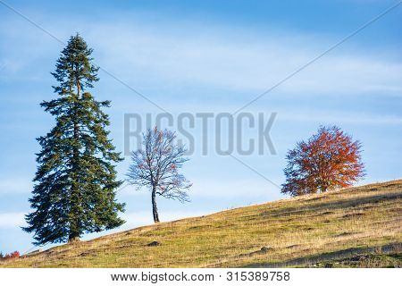Three Trees On The Hill. Different Plants In Several Conditions At Once. Spruce, Leafless And In Red