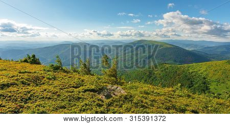 Mountain Scenery In Summer Afternoon. Fluffy Clouds On A Blue Sky Above The Distant Ridge. Spruce Tr