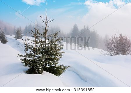 Spruce Trees On A Snowy Hill. Foggy Weather With Clouds On The Blue Sky. Bright Morning. Beautiful W