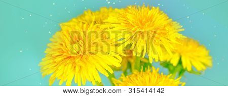 Bouquet Of Dandelions On A Creamy Emerald Background. Close Up View, Selective Focus Image