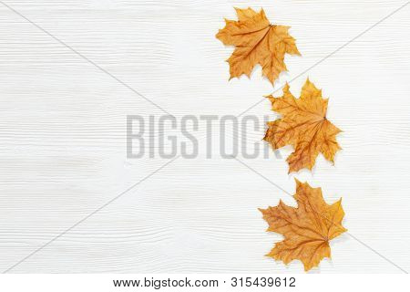 Three Yellow Maple Leaves On White Wooden Background With Copy Space. Overhead View. Autumn Theme.