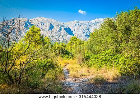 Biokovo Mountain Nature Park And Trees From Makarska Riviera, Dalmatia, Croatia