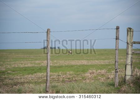 Farm Gate And On It A Bird Named Sabiá Of The Field (mimus Saturninus). It Corresponds To A Bird Fam
