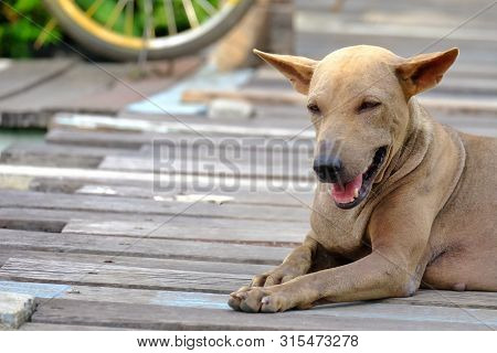 A Homeless Thai Dog Sitting On Wooden Floor With Smiling Face And Blurred A Bicycle Wheels Backgroun