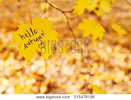 The Inscription Hello Autumn On A Yellow Maple Leaf On The Background Of The Park. Autumn Concept. C