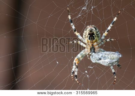 A Spider With Its Prey. Macro Shot