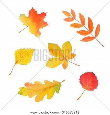 Colorful Autumn Foliage In Beautiful Style Isolated On White. Botanical Illustration. Autumn Waterco