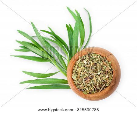 Tarragon Or Estragon Fresh And Dried Isolated On A White Background With Copy Space For Your Text. T