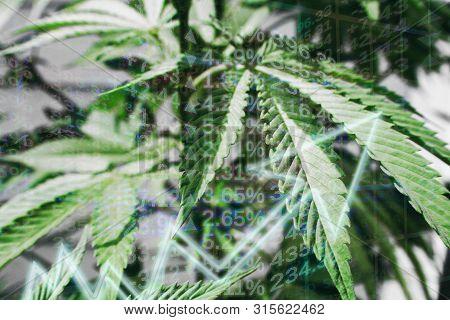 Cannabis Industry Profits High Quality Stock Photo