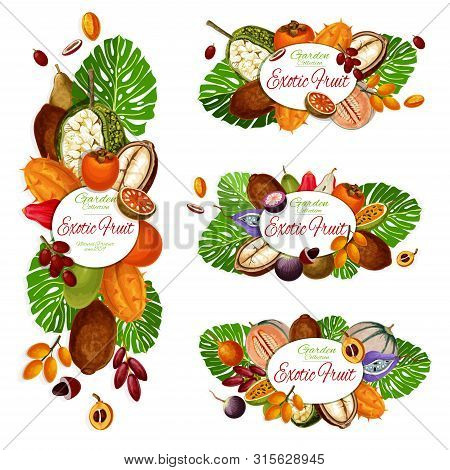 Exotic Fruits And Berries Vector Icons Of Tropical Persimmon, Cantaloupe And Durian, Marang, Date An