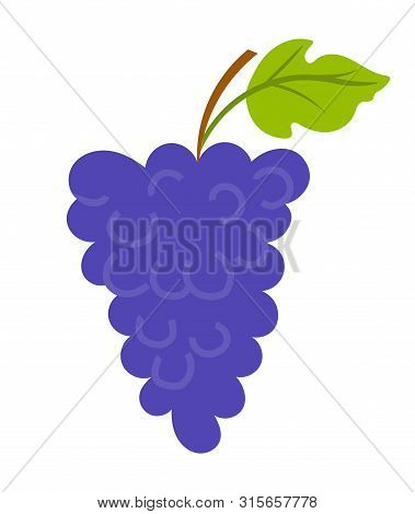 Vineyard With Leaf, Purple Seedless Bubo, Viticulture Element Of Decoration. Grapes On Wooden Stick,