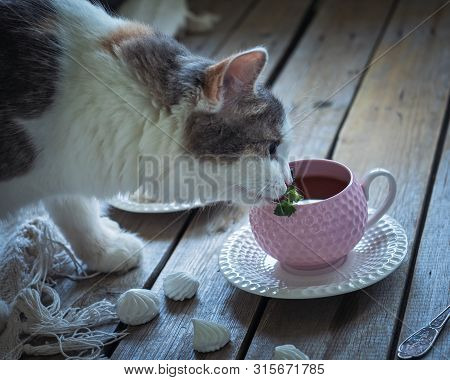 fluffy young cat sniffs a mint leaf in a tea Cup with tea poster