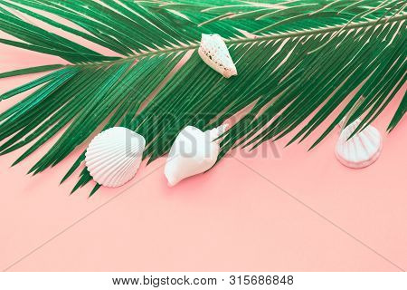 Feathery Green Palm Leaf White Sea Shells On Pink Background. Summer Tropical Nautical Creative Conc