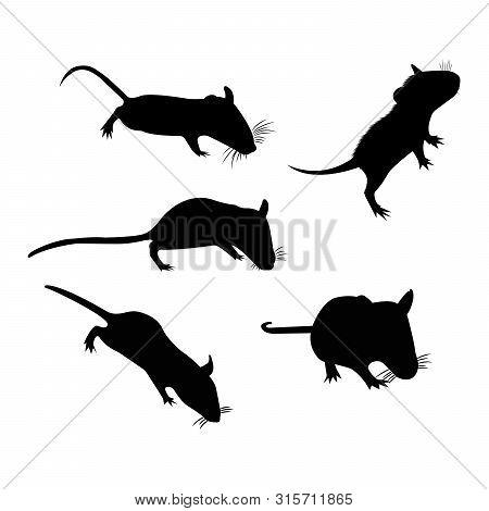 Silhouette. Pet Rat. Cute Rat. Cute Pet. Decorative Rat. Domestic Rat.