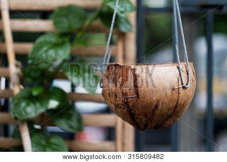 Coir Pot For Plant A Tree In Garden