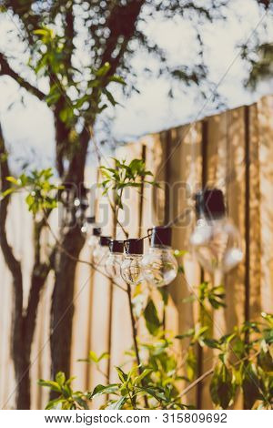 Trendy Globe String Lights Outdoor Hanging From Trees In Private Garden