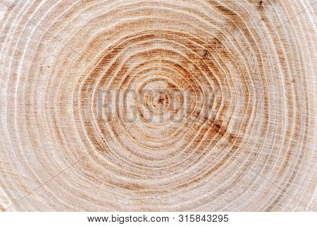 Natural Tree Rings Background. Wooden Texture. Close Up.