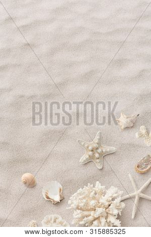 beach / sea themed textured background with beautiful shells, corals and starfish on pure white sand - summer concept, copyspace for your text