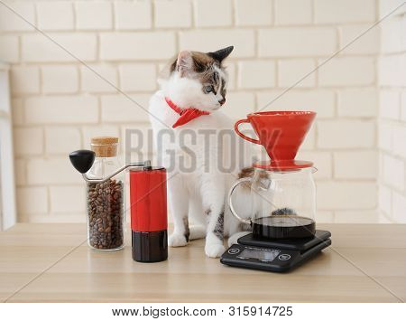 Barista cat. Alternative manual hand brewing coffee. Drip batch filter. Red coffee grinder. Electronic scale poster