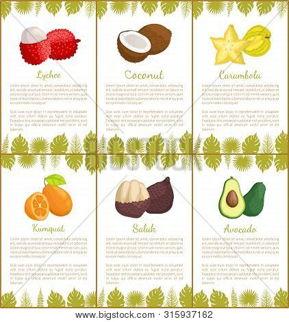 Lychee And Coconut Carambola Posters Set With Text Sample Vector. Salak And Avocado, Star Slice And