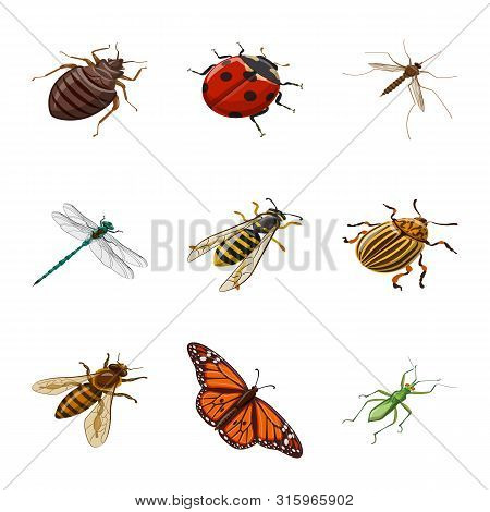 Vector Design Of Insect And Fly Sign. Set Of Insect And Entomology Stock Vector Illustration.