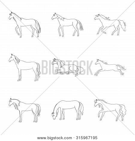 Vector Illustration Of Stallion And Galloping Icon. Set Of Stallion And Riding Vector Icon For Stock