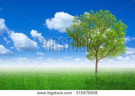 Lone Tree In A Meadow With On Green Field Or Spring Tree In Green Field Of Grass And Blue Sky On Bac