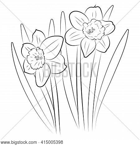 The Daffodil Flower. Graphic Drawing Of A Flower. Spring Flowers Drawn By Hand.