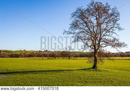 A Lone Leafless Tree In An Empty Green Field On A Sunny Winters Day, New Galloway Scotland