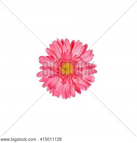 Festive Minimal Layout With One Gentle Pink Gerbera Flower Isolated In Center Of White Background. C