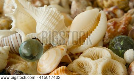 Close Up Lots Of Different Mixed Colorful Seashells As Background. Various Corals, Marine Mollusk An