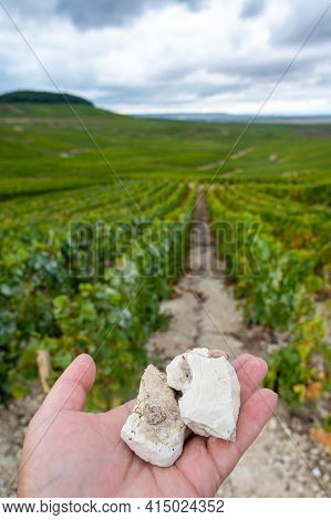 Hand With White Chalk Stones From Soils Of Cote Des Blancs Near Cramant, Region Champagne, France An