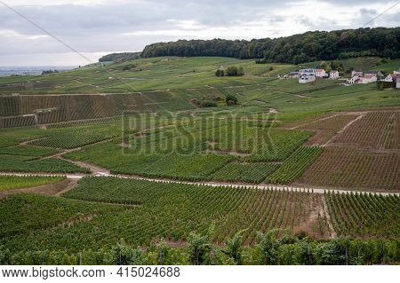 Landscape With Green Grand Cru Vineyards Near Epernay, Region Champagne, France In Autumn Rainy Day.