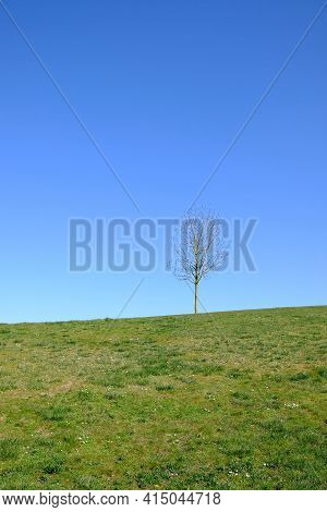 A Lonely Leafless Tree With A Blue Sky On The Background