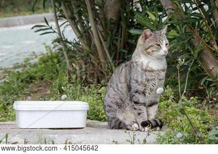 Gray Striped Stray Cat Sits Next To The Food Container Against The Backdrop Of Green Bushes. Portrai