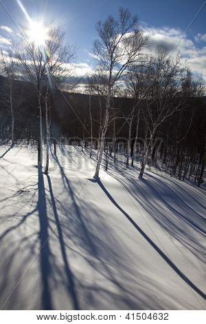 Tree Shadows In Snow