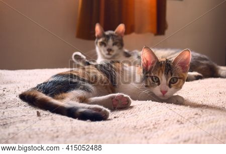 Two Tabby, Mixed Breed Cats Relaxing On A Bed, Staring At The Camera.