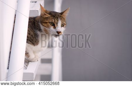 Young, Mixed Breed Cat, Observing The Surroundings From A High Place. Large Negative Space.