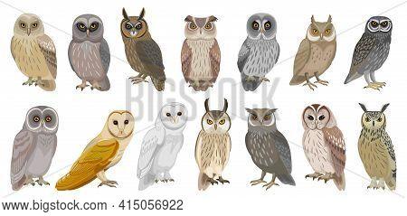 Owl Bird Cartoon Vector Set Illustration Of Icon. .vector Set Icon Of Animal Owl. Isolated Cartoon C
