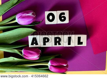 April 6 On Wooden Cubes .tulips On A Purple Background .spring.calendar For April.