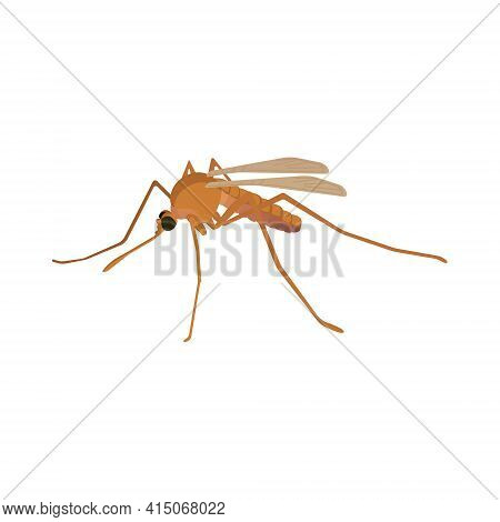 Mosquito Is A Flying Invertebrate Animal, A Blood-sucking Insect That Carries Dengue And Other Disea