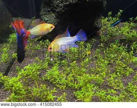 Various Aquarium Fish. Colorful Fish At The Bottom Of The Aquarium.