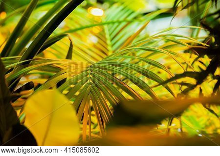 Tropical Natural Palm Tree Leaf. Natural Exotic Texture, Summer Yellow Green Background. Vacation, T