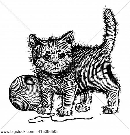 The Kitten, A Cat With A Ball Of Wool, Vector Illustration. Vintage Graphics And Handwork. The Cat S
