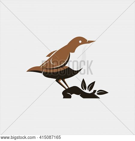 Bird Illustration. Vector Animal Or Fauna Design Graphic Element Template